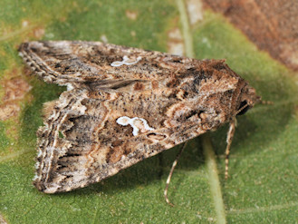 Moths and Butterflies of Europe and North Africa